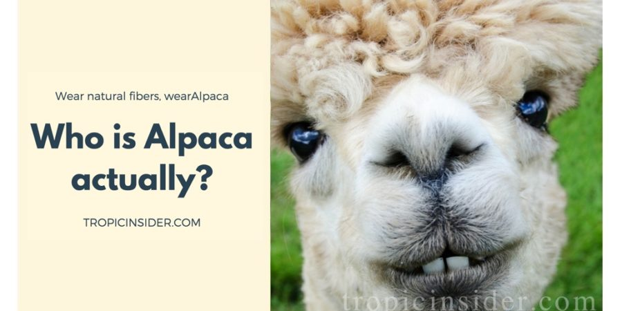 Who is Alpaca2